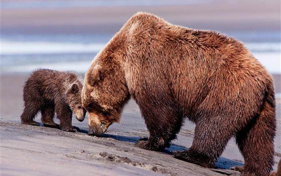 Papéis de Parede Mamã e bebê do urso