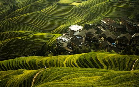배경 화면 아름 다운 롱 지 라이스 테라스, 빌리지, 구이린, 중국