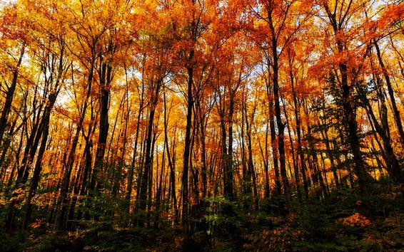 Fondos de pantalla Hermoso otoño, árboles, bosque