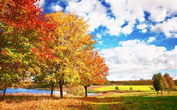 Fondos de pantalla Hermoso otoño, árboles, hojas amarillas, nubes blancas
