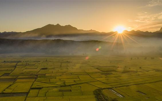 Wallpaper Beautiful golden fields, sun rays, fog, morning