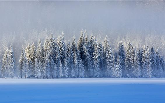 Fondos de pantalla Hermoso invierno, nieve, árboles, lago, azul, Kanas, China