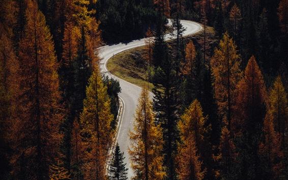 Fondos de pantalla Carretera de curvas, coníferas, otoño.