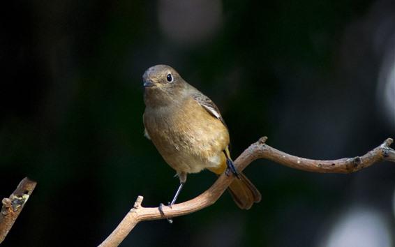 Fondos de pantalla Pájaro, rama de un árbol
