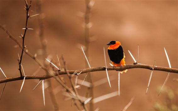 Wallpaper Bird, twig, thorns