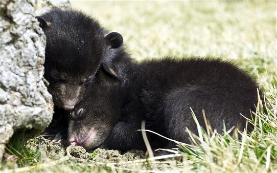 Fondos de pantalla Cachorros de oso negro