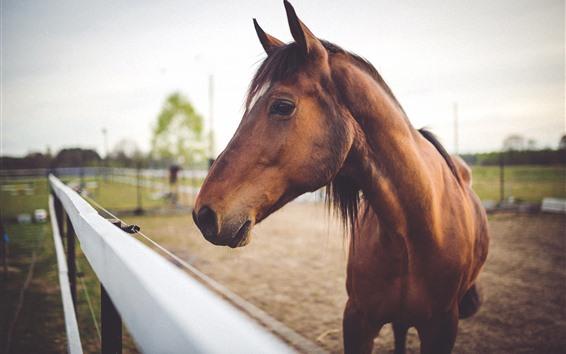 Papéis de Parede Cavalo de Brown, face, cabeça, cerca