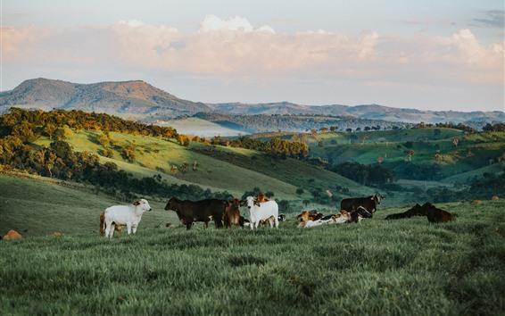 Wallpaper Bull, grass, slope, hills
