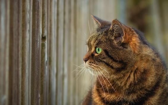 Fondos de pantalla Gato, ojos verdes, cabeza.