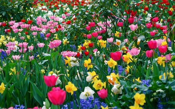 Fondos de pantalla Coloridas flores, tulipanes, narcisos.