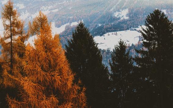 Fondos de pantalla Coníferas, árboles, nieve, invierno.