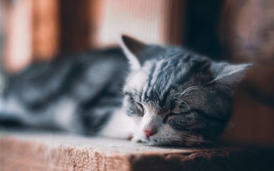 壁紙 眠っているかわいい子猫