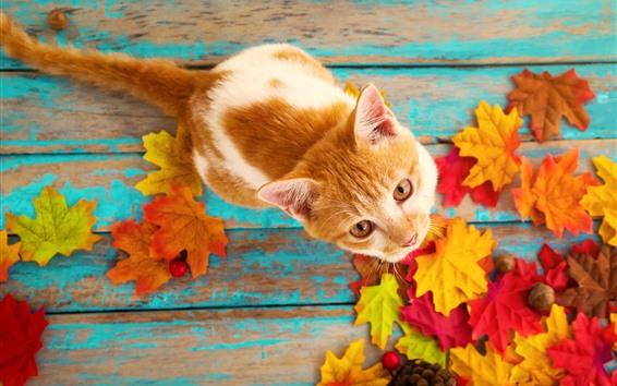 Fondos de pantalla Lindo gatito mira hacia arriba, hojas de arce.