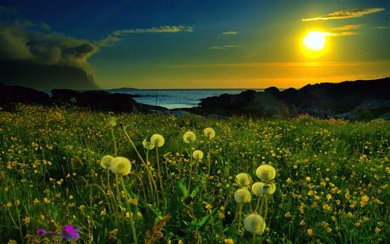 Fondos de pantalla Diente de león, mar, puesta de sol
