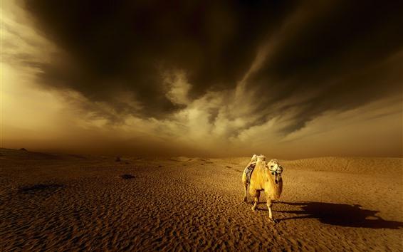 Fondos de pantalla Desierto, camello, nubes, atardecer