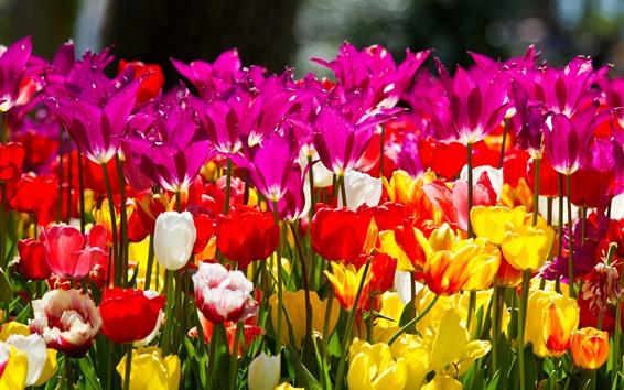 Fondos de pantalla Diferentes colores tulipanes, rosa, amarillo, blanco, rojo