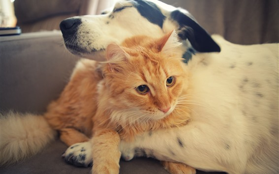 Fondos de pantalla Perro y gato amigos