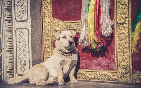Fondos de pantalla Perro, puerta, sol