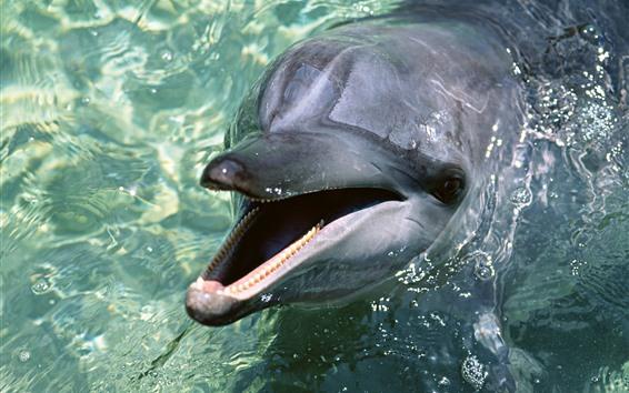 Fondos de pantalla Delfines fuera del agua, animal marino.