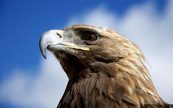 Fondos de pantalla Águila, cabeza, pico, ojo, cielo, nubes