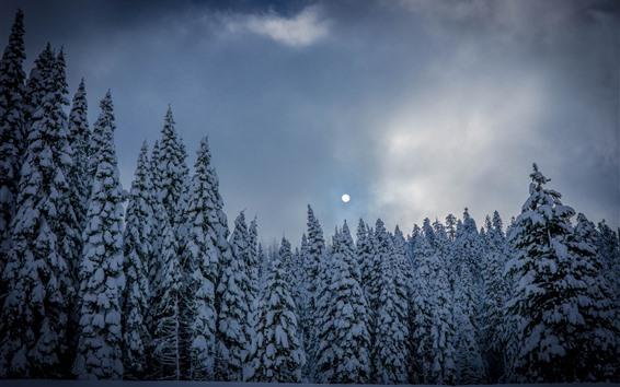 Fondos de pantalla Bosque de abetos, arboles, nieve, invierno, luna.