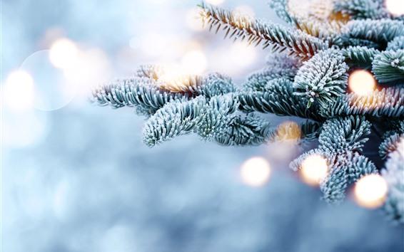Fondos de pantalla Ramitas de abeto, nieve, escarcha
