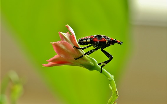 Fondos de pantalla Flor, insecto, insecto
