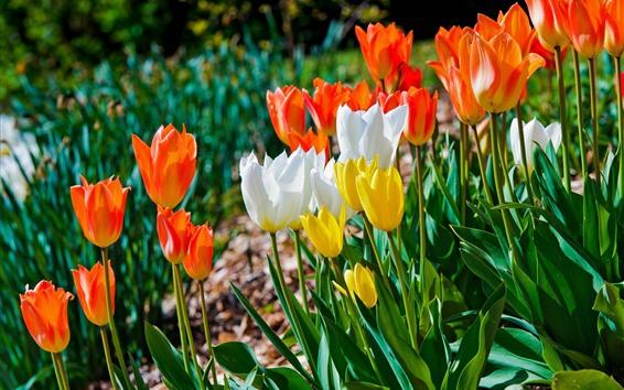 Обои Цветы полевые, белые, оранжевые, желтые тюльпаны