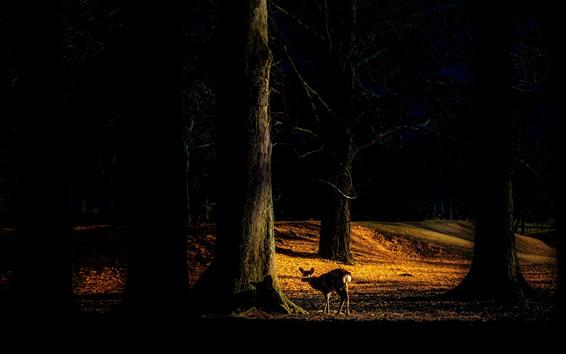 Wallpaper Forest, deer, shadow, sunshine