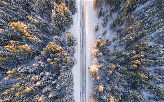 Fondos de pantalla Bosque, camino, nieve, invierno, vista superior.