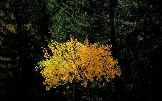 Fondos de pantalla Bosque, árbol, hojas amarillas