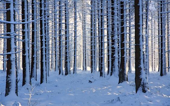 Fondos de pantalla Bosque, árboles, nieve espesa, invierno