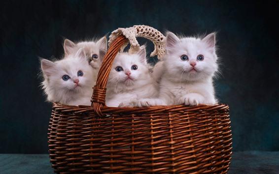 Wallpaper Four white kittens in a basket