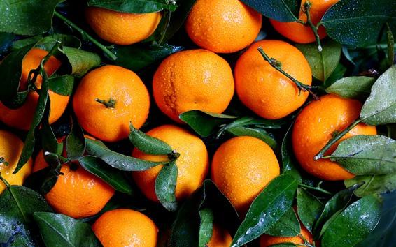 Fond d'écran Mandarines fraîches, gouttelettes d'eau