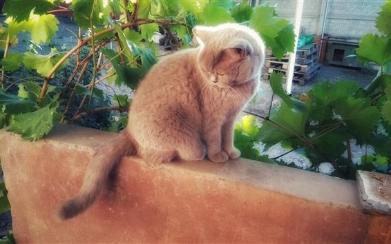 Обои Пушистый котенок, виноградные листья