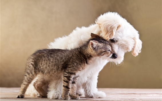 Обои Пушистый щенок и котенок