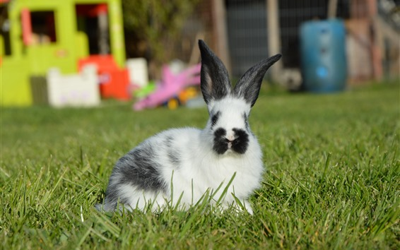 Fondos de pantalla Conejo peludo, hierba verde
