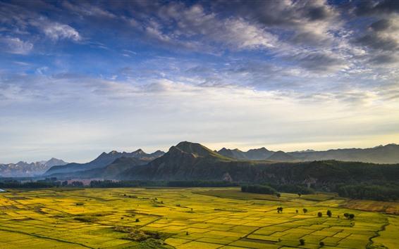 Fondos de pantalla Campos de oro, montañas, paisaje hermoso de la naturaleza