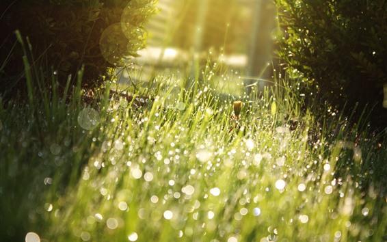 Fondos de pantalla Hierba, prado, gotas de agua, sol, brillo, verano