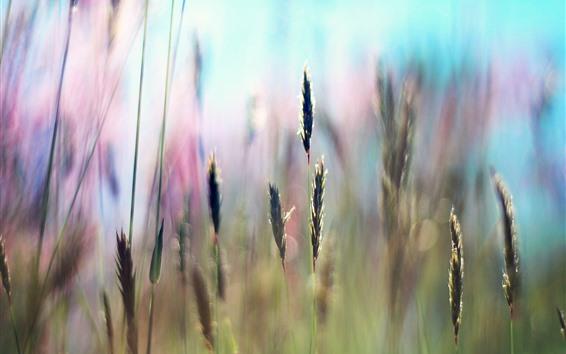 Fondos de pantalla Hierba, semillas, fondo nebuoso