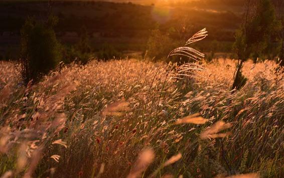 Обои Трава, солнце, природа пейзаж