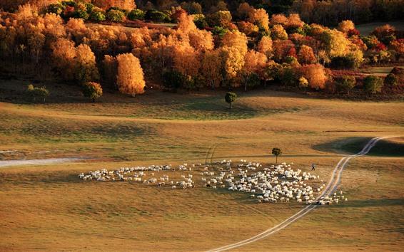 Обои Луга, деревья, овцы, осень, Китай