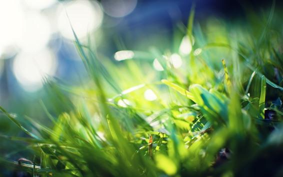 Fondos de pantalla Hierba verde, brillante, resplandor, sol, verano