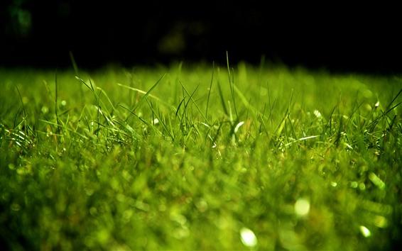 Wallpaper Green grass, hazy, nature