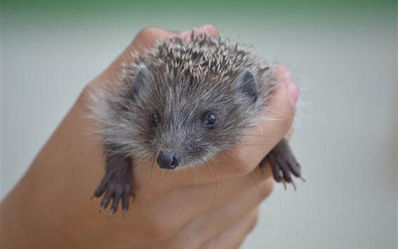 Papéis de Parede Hedgehog, mão