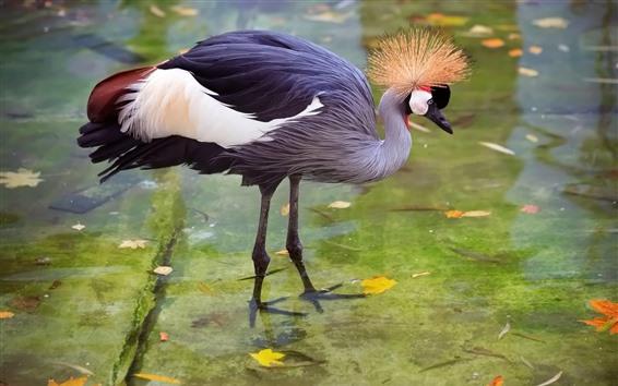 Papéis de Parede Garça-real, cegonha, pássaro bonito, água