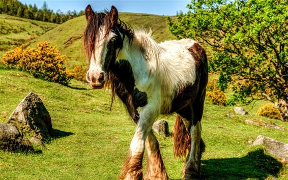 Fondos de pantalla Paseos a caballo, césped, sol, sombra