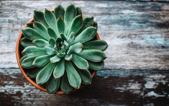 Wallpaper Houseplant, botanic, succulents