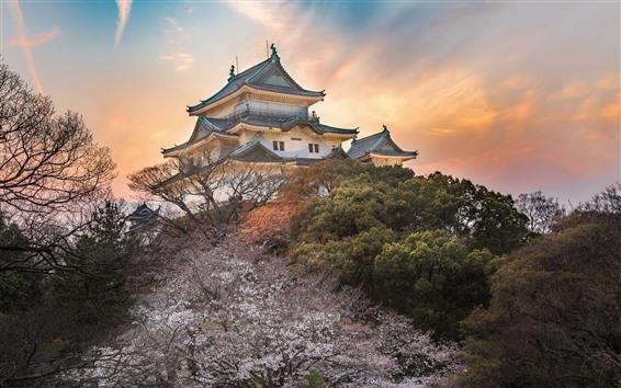 Papéis de Parede Japão, templo, árvores, Crepúsculo