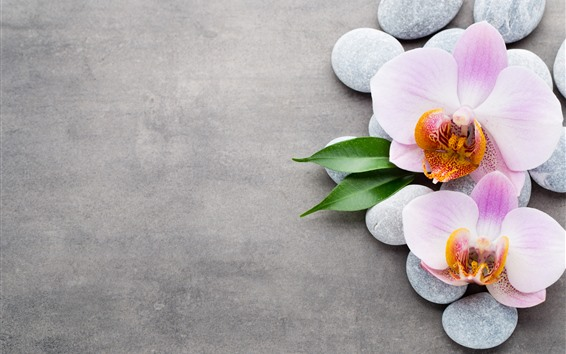 Papéis de Parede Luz rosa phalaenopsis, calçada